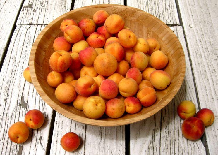 Компот на зиму из абрикосов с косточками