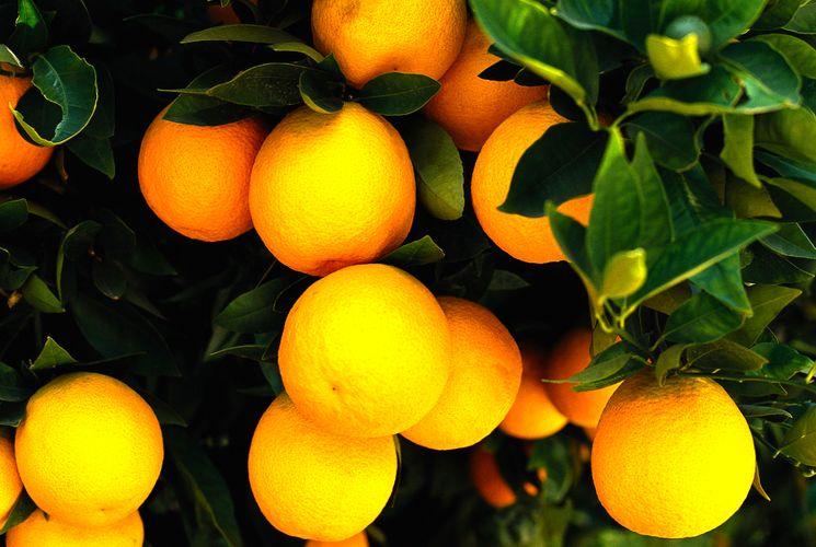 Интересно про апельсин - польза калории