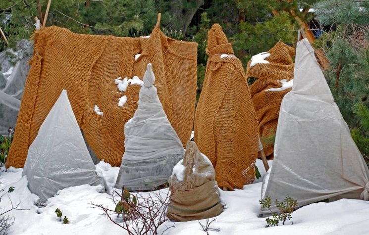 Утепление дерева на зиму