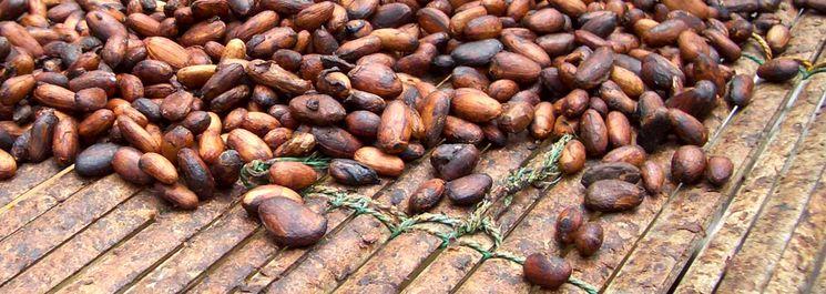 История какао и шоколада