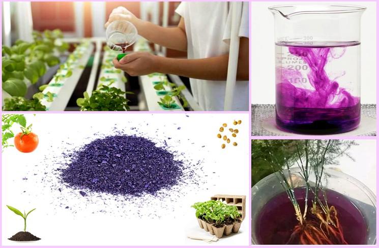 Как использовать марганцовку для растений