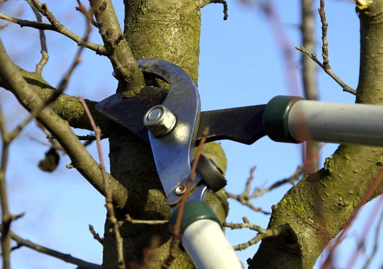 Как обрезать яблони весной
