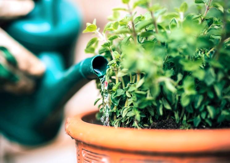 Как поливать комнатные цветы и растения