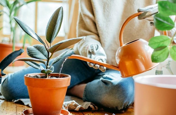Как правильно поливать комнатные растения и цветы