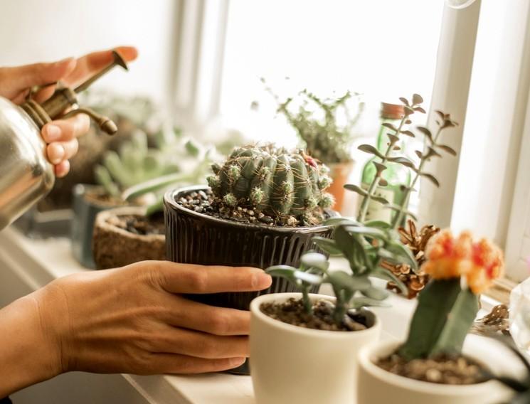 Правильный полив кактусов