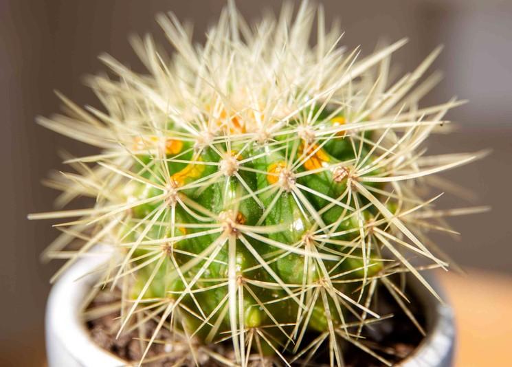 Комфортная температура для кактусов