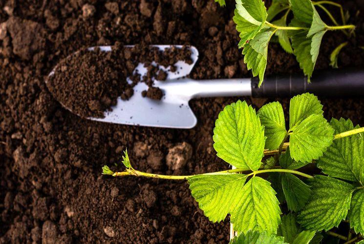 Как использовать органические удобрения
