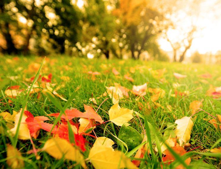 Какие удобрения нужно вносить осенью?