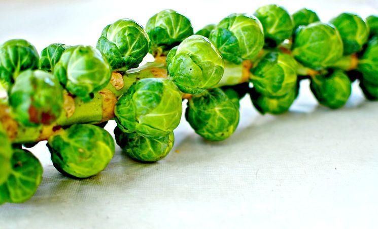 Выбор сорта брюссельской капусты