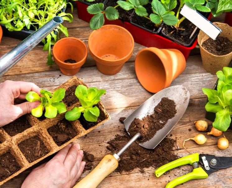 Когда сажать семена овощей и цветов - сроки посева семян на рассаду