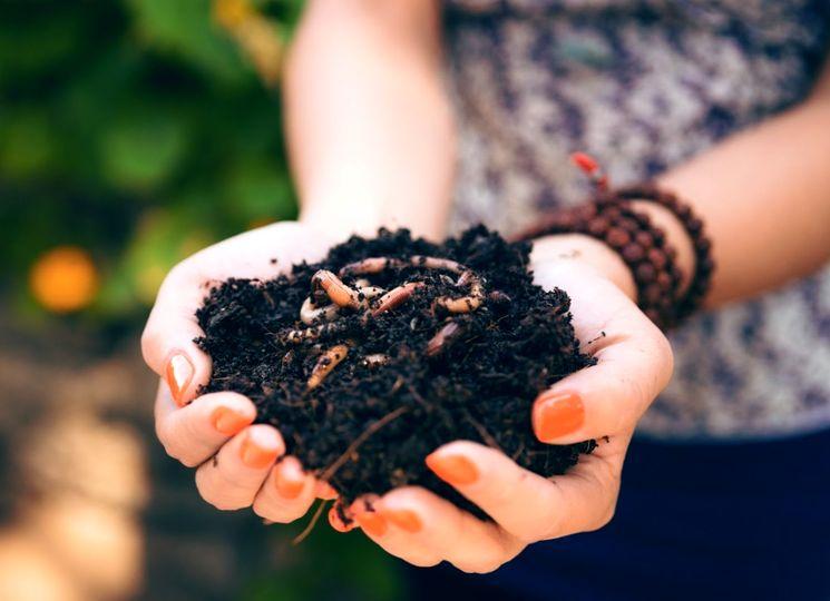 Выращиваем компостных червей сами