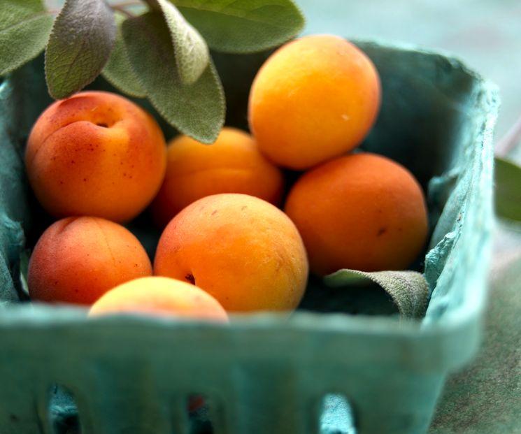 Полезные советы о приготовлении абрикосовых компотов
