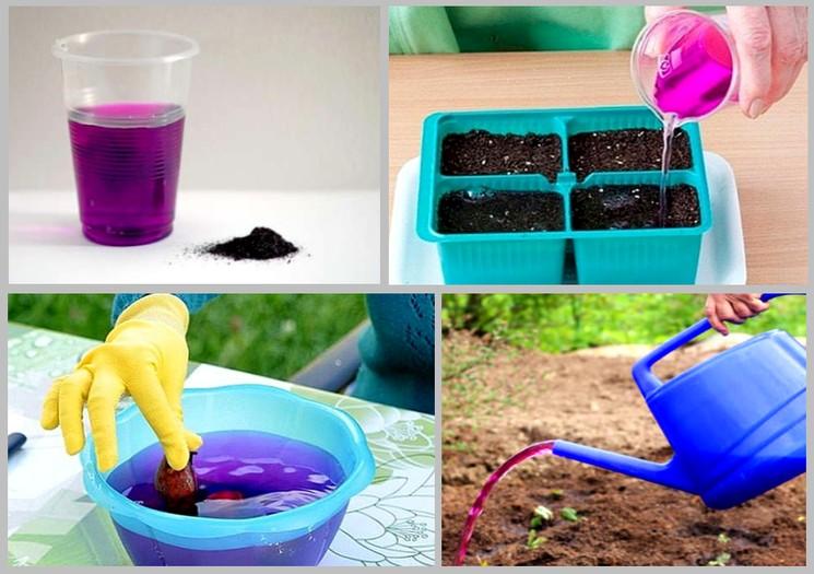 Марганец для растений - как использовать марганцовку на участке