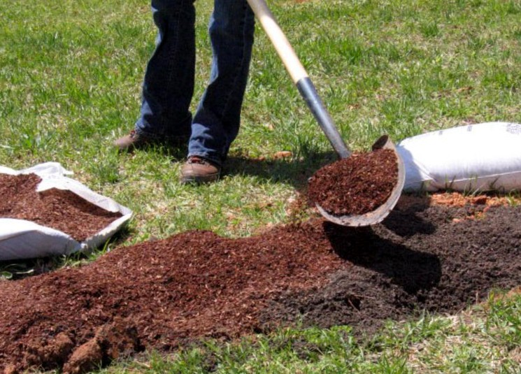 Место и почва для малины под зиму