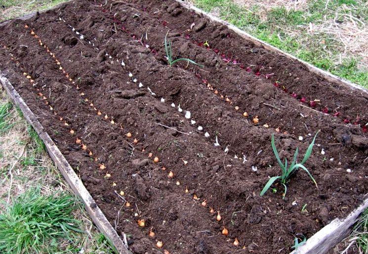 Методика посадки лука весной
