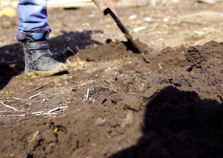 Нужно ли перекапывать землю осенью в огороде
