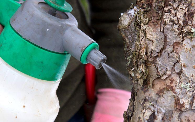 Подготовка плодовых деревьев к утеплению