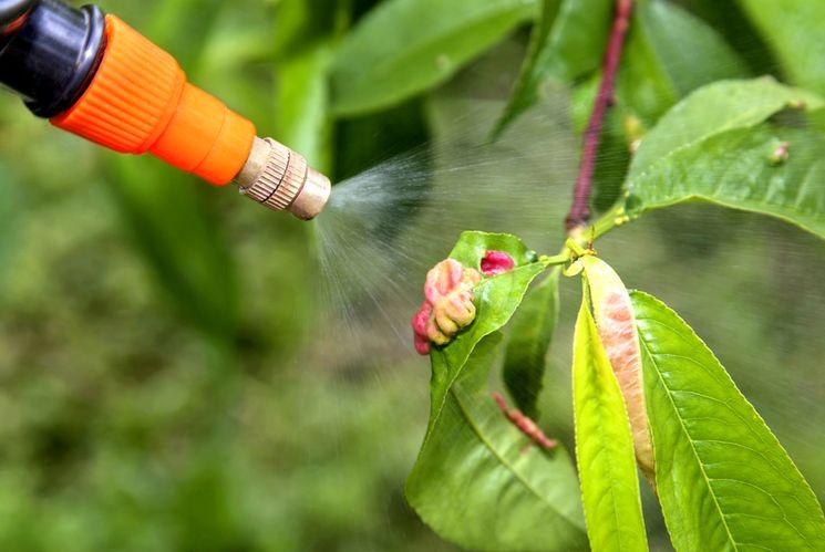 Повторное опрыскивание плодовых деревьев