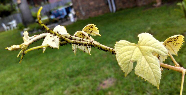 Опрыскивание ягодных кустарников осенью