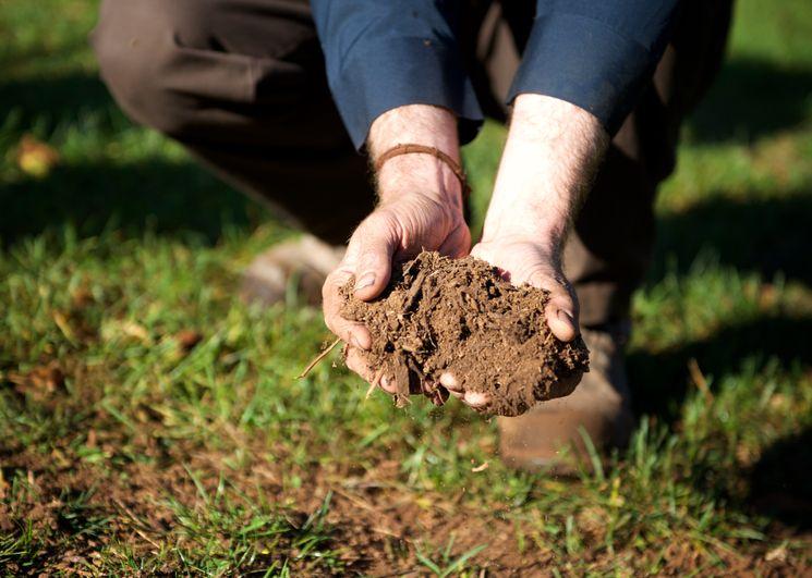 Органические удобрения под зиму