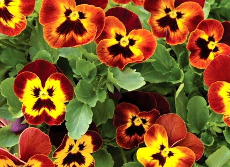 Как сеять под зиму семена однолетних цветов