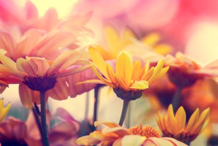 Посадка цветов осенью