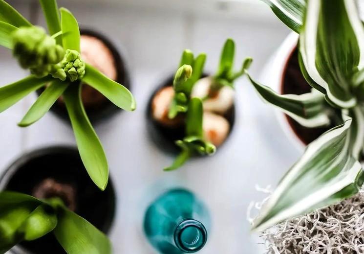 Основные виды полива комнатных растений