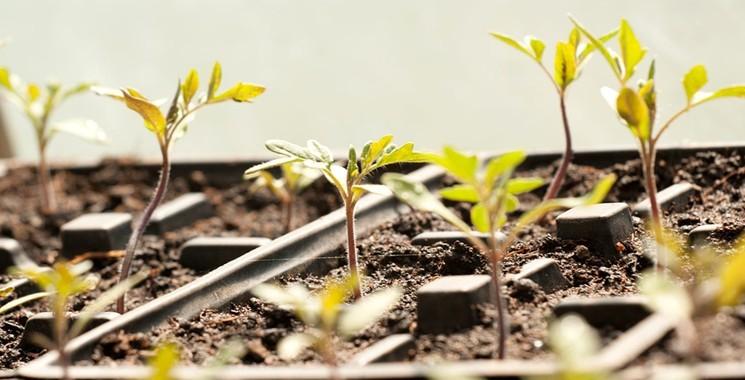 Как пикировать рассаду овощей