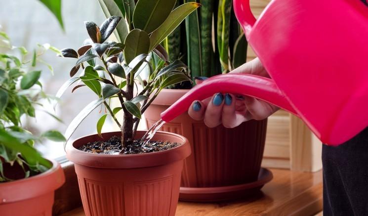 Полив комнатных растений водой из аквариума