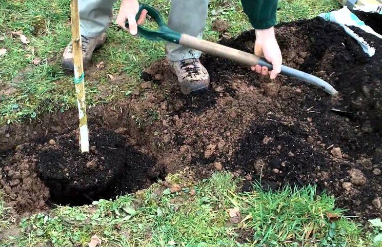 Посадка и пересадка деревьев в апреле
