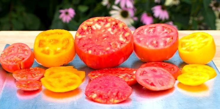 Позднеспелые сорта помидор