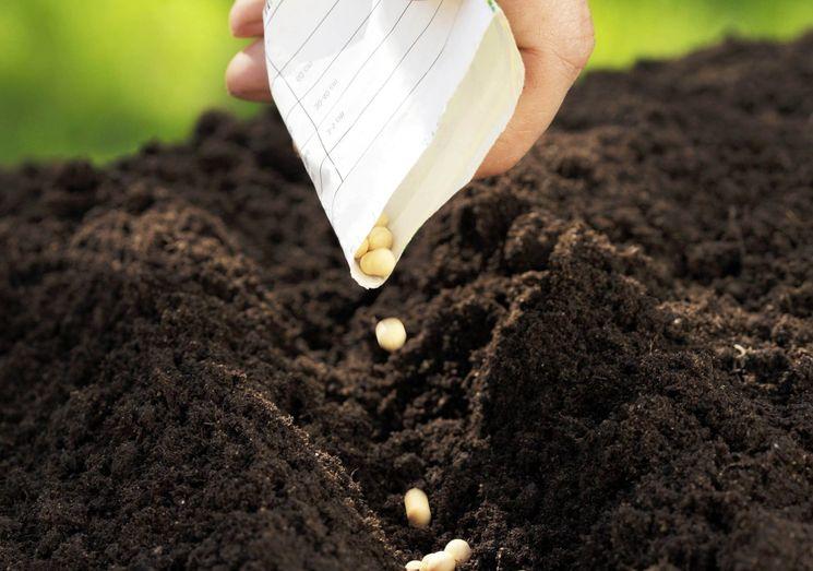 Правила посева овощей осенью