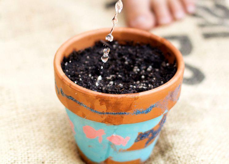 Посев и полив семян комнатных растений