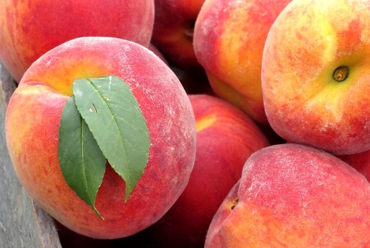 Размножение персика косточкой