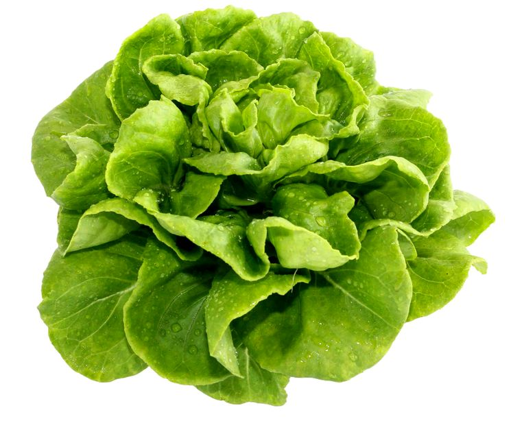 Баттерхед салат