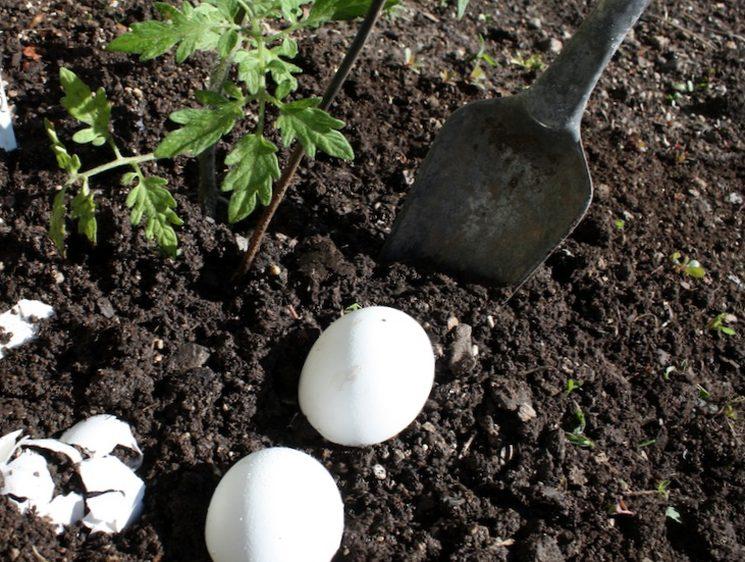 Самодельные удобрения для подкормки рассады томатов