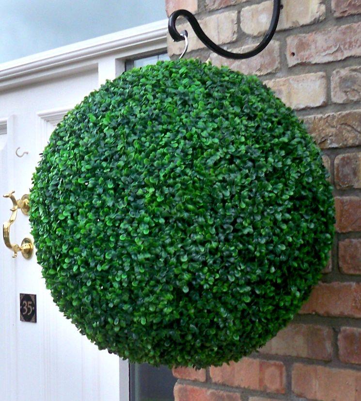 Вечнозеленый самшит для дачи