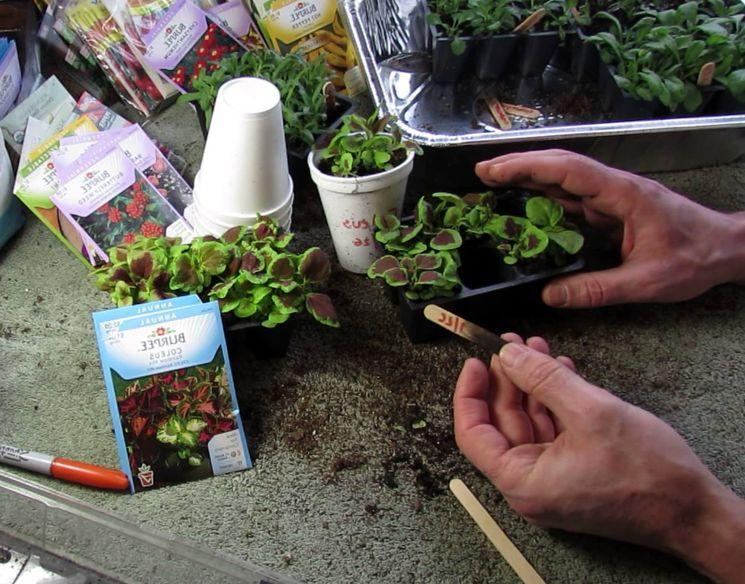 Как сеять под зиму семена однолетних цветов в школку?