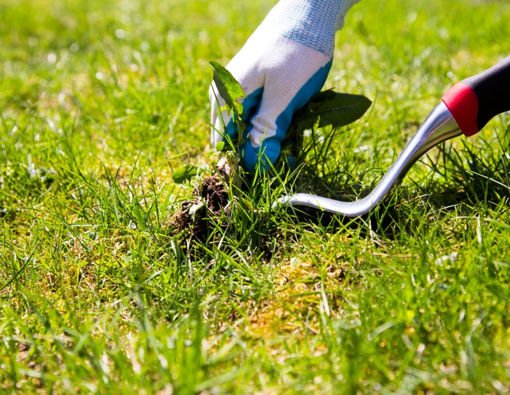 Уход за газоном - борьба с сорняками