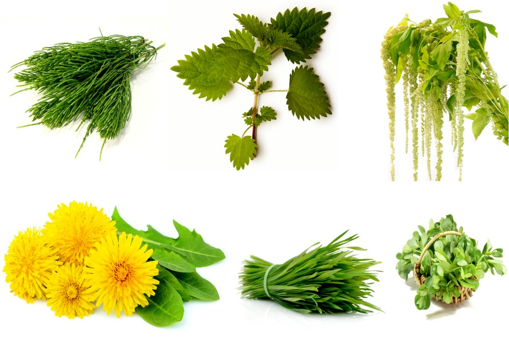 Сорные растения на участке - фото названия и описание