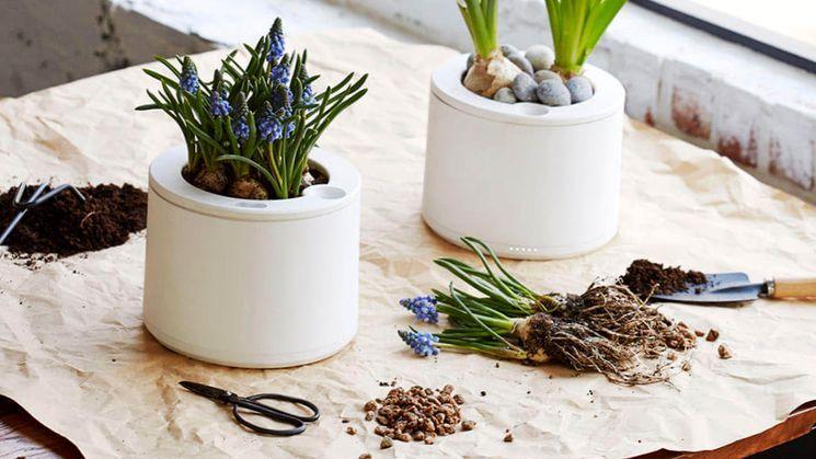Разведение комнатных растений из семян в домашних условиях