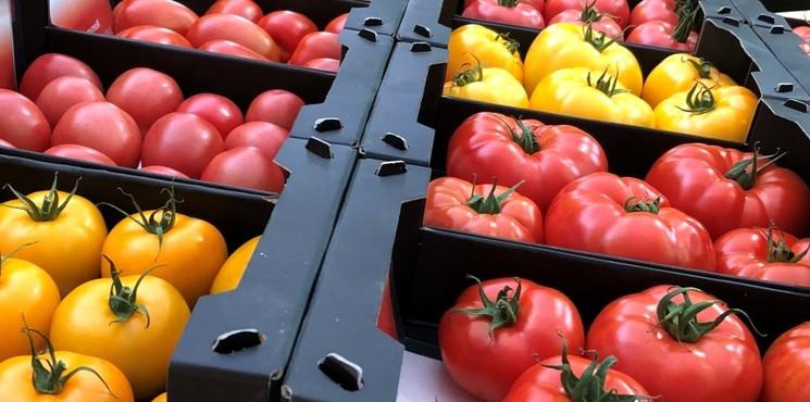Среднеспелые сорта томатов