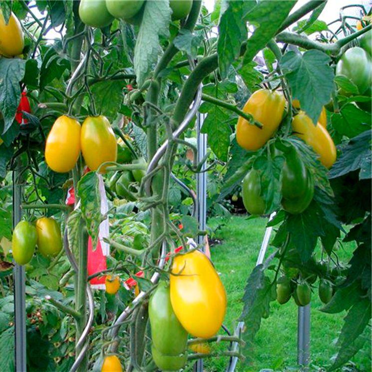 Выращивание томатов открытом грунте