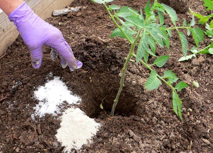 Удобрения для рассады томатов