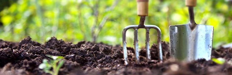 Советы огородника