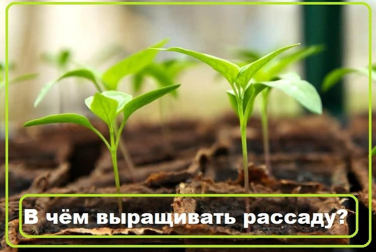 В чем лучше выращивать рассаду в домашних условиях
