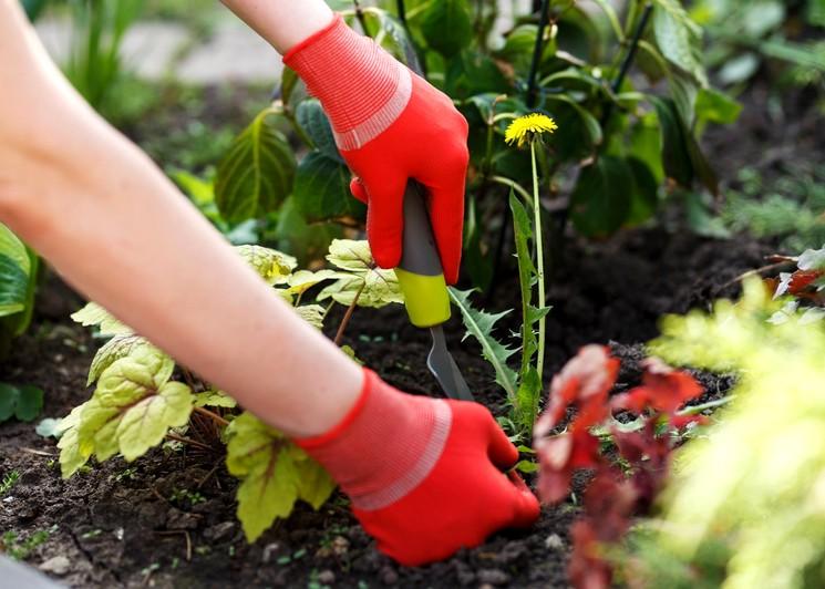 Вред и польза сорных растений