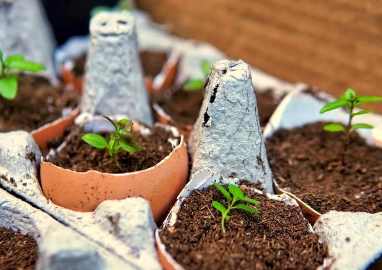 Яичная скорлупа для выращивания рассады дома