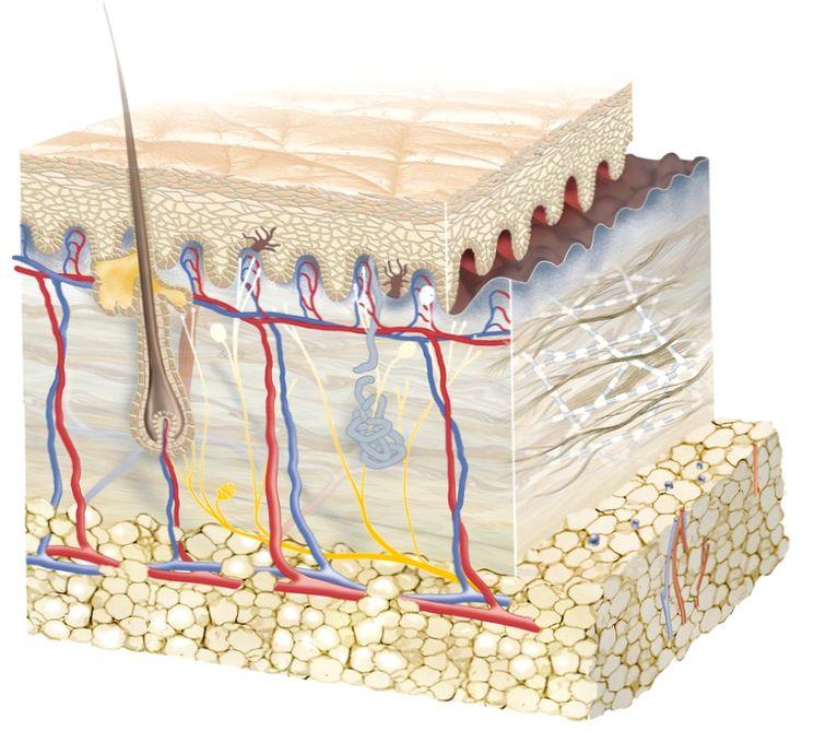 Естественная защита кожи человека