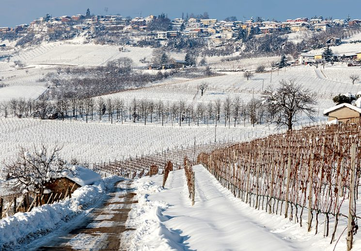Защищаем виноград от морозов зимой